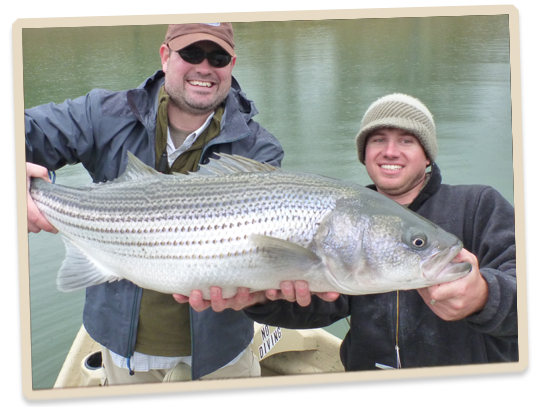 Striper fishing tennessee pussy uploads for Fishing lakes in tennessee
